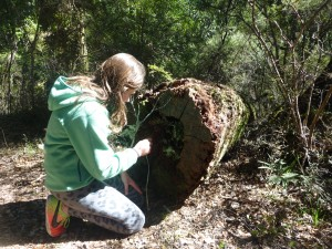 Rhea has fun on the side of the trail with a fallen tree.