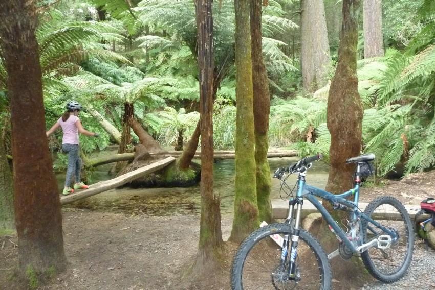 A stunning distraction Rotorua Mountain Biking with the kids.